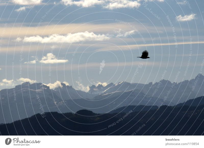 Sky Clouds Far-off places Mountain Freedom Lake Moody Bird Flying Alps Lake Constance
