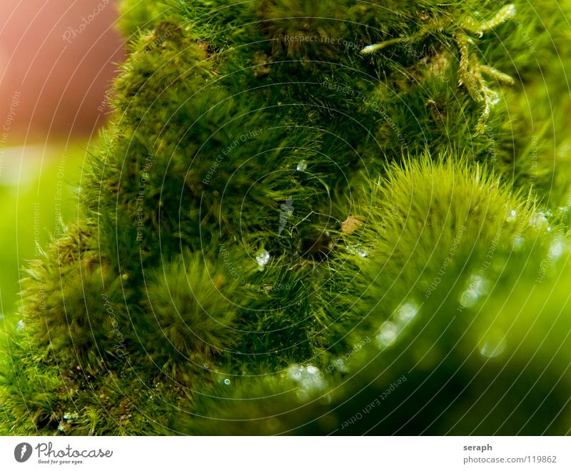 Nature Plant Green Background picture Growth Drops of water Soft Stalk Moss Botany Dew Nest Lichen Woodground