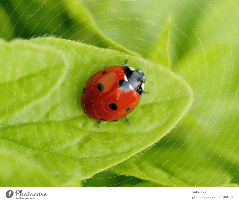 finally break Animal Wild animal Beetle Ladybird Insect 1 Touch Happiness Healthy Happy Small Cute Green Red Colour Health care Love Calm Environment Desire Sit