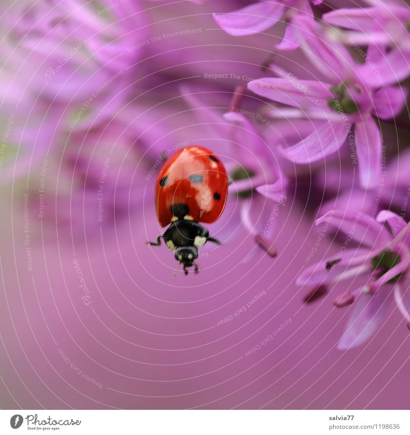 Nature Plant Summer Flower Red Animal Spring Blossom Sports Happy Garden Jump Wild animal Free Blossoming Cute