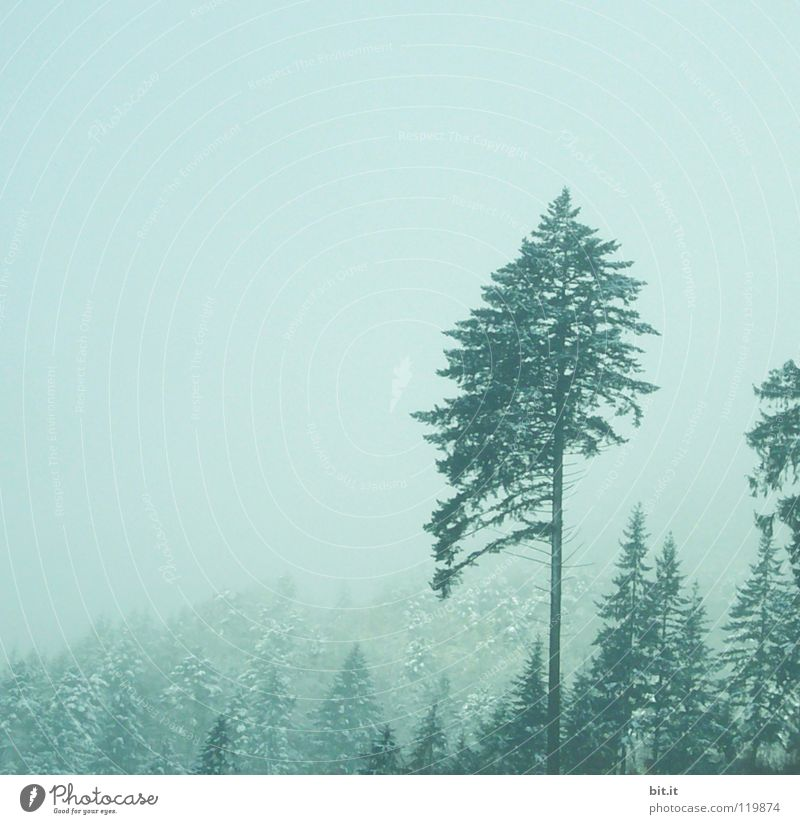 Sky Nature Vacation & Travel Blue White Tree Loneliness Far-off places Winter Forest Cold Mountain Snow Background picture Germany Horizon