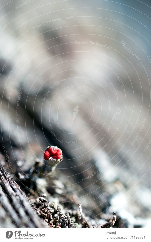 Small and bright red Nature Spring Summer Moss Blossom Lichen Dark Thin Authentic Simple Success Natural Gray Red Emotions Loneliness Beginning survival artist