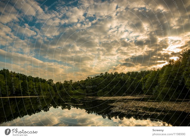 Golden hour at the lake Nature Landscape Plant Air Water Sky Clouds Sun Sunrise Sunset Sunlight Spring Summer Beautiful weather Tree Bushes Water lily pond Pond
