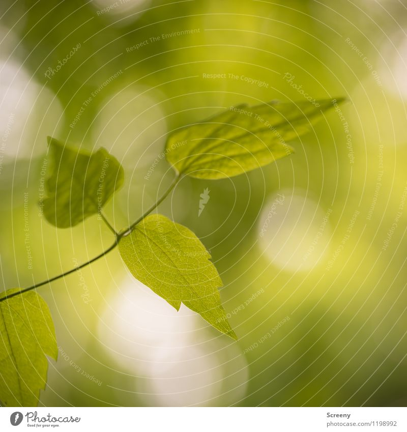 Nature Plant Green Summer Tree Leaf Spring Growth