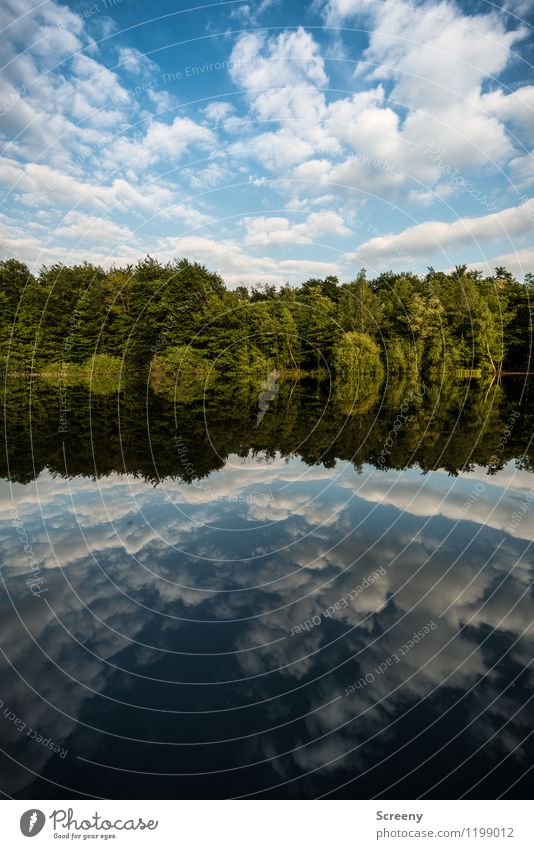 mirrored Nature Landscape Plant Air Water Sky Clouds Spring Summer Beautiful weather Tree Bushes Pond Lake Blue Green White Serene Patient Calm Contentment