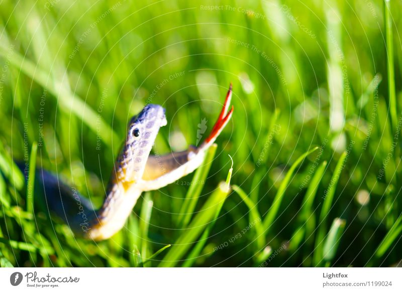 He who winds lies lies Animal Snake 1 Bow Animal tracks Footprint Infancy Luxury Eroticism Whimsical Wellness Threat Toys Wiggly line Grass Meadow Undergrowth