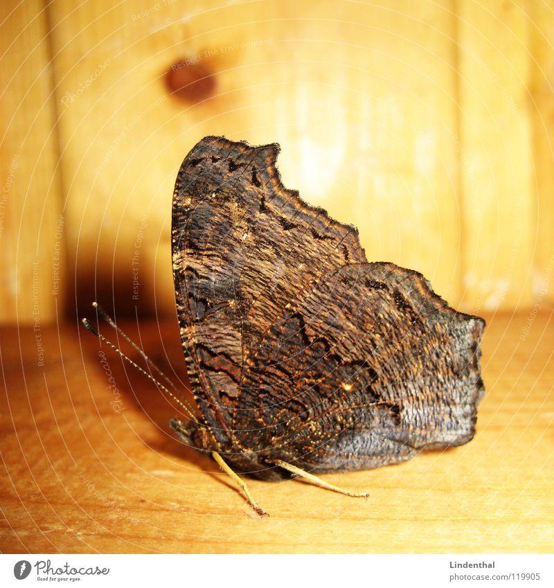 Wood Legs Wing Butterfly Feeler Joist