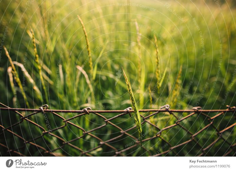 Grass blade grows through the meshes in the wire mesh fence Environment Nature Plant Summer Beautiful weather Bushes Meadow Field Garden Wire netting fence