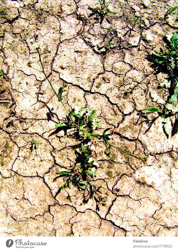 Plant Summer Desert Footpath