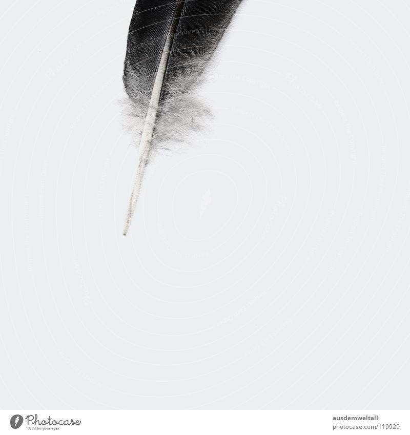 White Black Emotions Gray Bright Feather Analog Easy Ease Minimal Scan