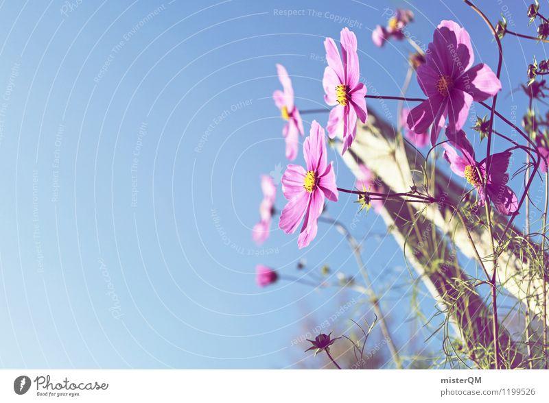 Garden pleasure. Nature Landscape Beautiful weather Esthetic Contentment Flower Flower meadow Flowerbed Violet Sky Blossom Blossom leave Colour photo