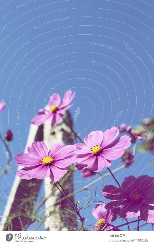 sky high. Art Work of art Esthetic Contentment Flower Flower meadow Flowerbed Flower stalk Pink Violet Violet sky Blossom Blossoming Colour photo Subdued colour