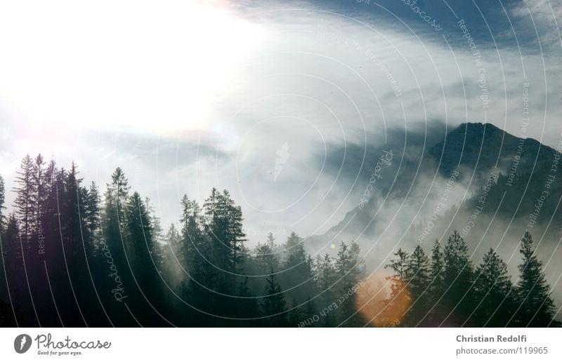 Sky Tree Sun Clouds Forest Landscape Fog Dew