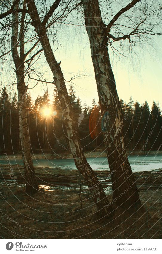 Sky Nature Water Old Beautiful Tree Sun Calm Winter Loneliness Forest Cold Life Dark Landscape Moody