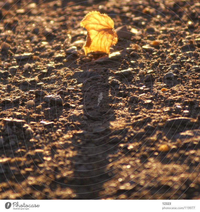 Old Calm Leaf Life Autumn Stone Contentment Power Gold Beginning Grief Floor covering End Transience Serene Radiation