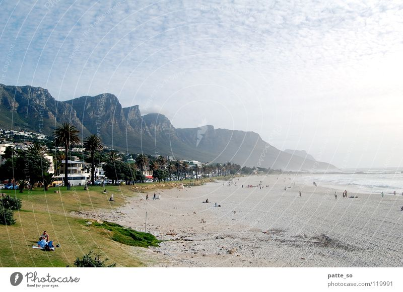 Beach and mountains Cape Town Physics Green Palm tree Africa Warmth Mountain Water Sand