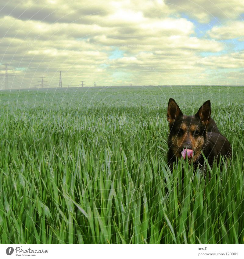 Dog Sky Nature Blue Sun Animal Clouds Black Eyes Meadow Playing Horizon Brown Background picture Field Energy industry