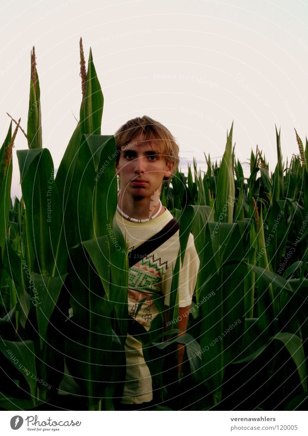 in between. Field Green Plant Leaf Corn cob Maize Nature Americas Exterior shot