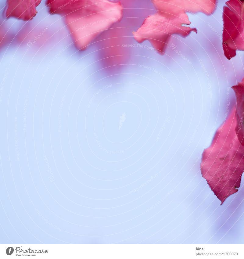 fringe Blue Red Autumn leaves Deserted Marginal phenomenon