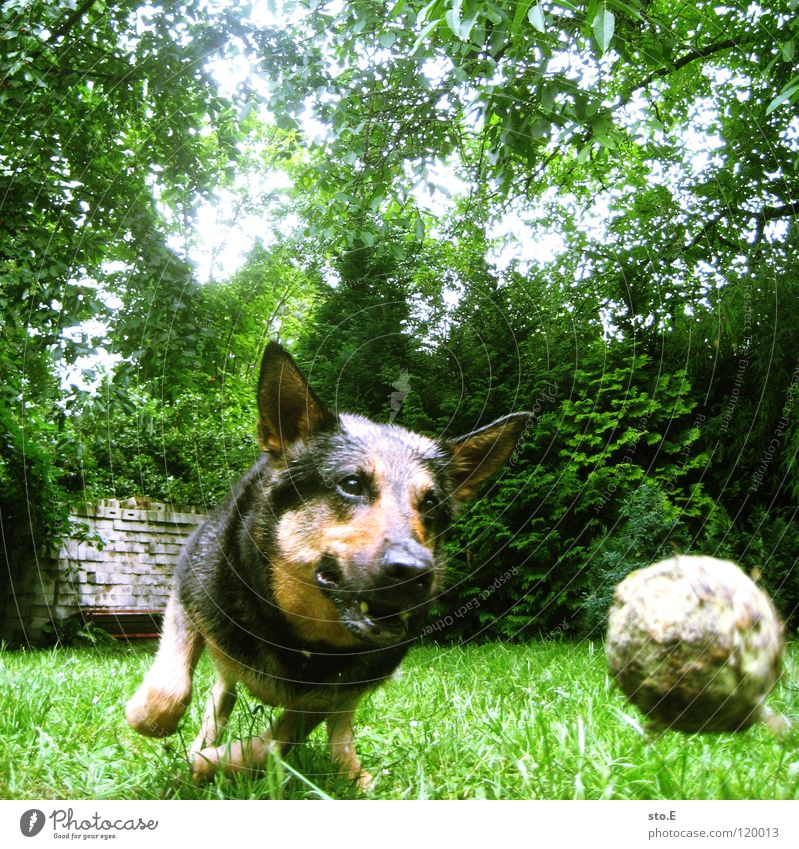 Dog Nature Sun Animal Black Eyes Meadow Playing Friendship Brown Large Arrangement Speed Force Sweet Broken