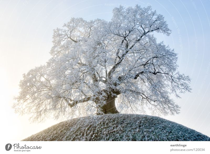 Old Sky White Blue Winter Loneliness Cold Snow Mountain Orange Fog Branch Transience Hill Tree Retirement