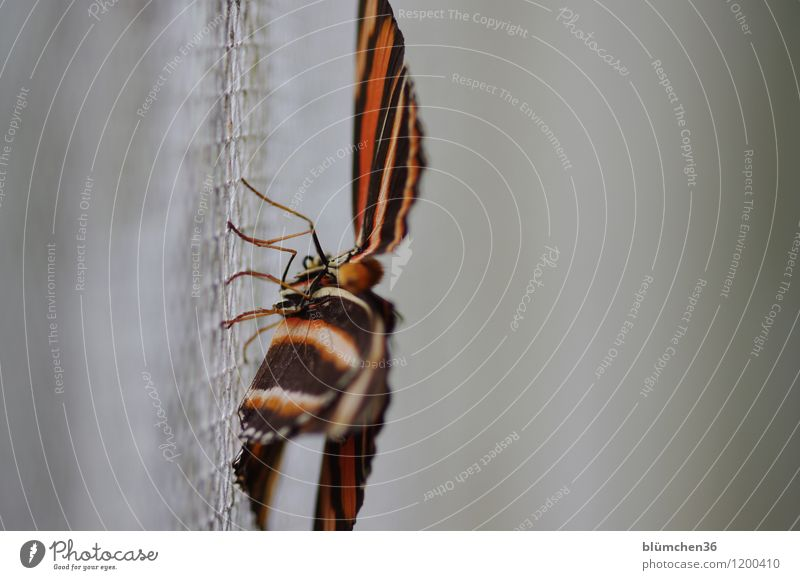 Beautiful Animal Natural Legs Wild animal Esthetic Sit Perspective Wing Living thing Insect Butterfly Captured Striped Grating Crouch