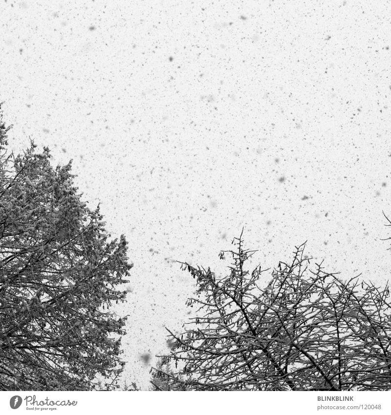 Nature Sky White Tree Winter Black Cold Gray Ice Graffiti Weather Branch Frozen Snow Express train Snowflake