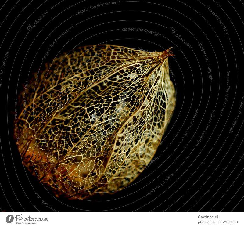 Nature Beautiful Plant Winter Leaf Black Autumn Style Blossom Line Orange Design Environment Gold Network