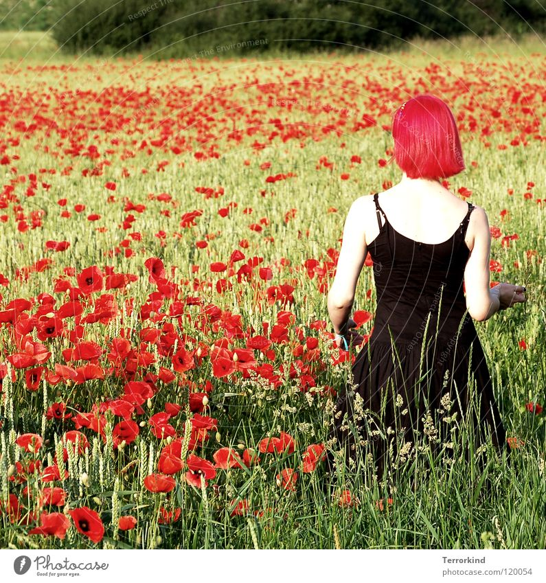 She.let.me.see.that.face. Field Summer Hot Physics Degrees Celsius Going Dress Black Red White Radiation False Red-haired Poppy field Hiking To go for a walk