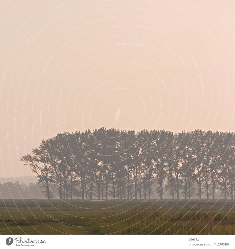 afternoon dream Nature Landscape Plant Sky Tree Grass Field Moody Romance Calm Mood lighting Afternoon Fog Ambience Dreamily Tone-on-tone Subdued colour