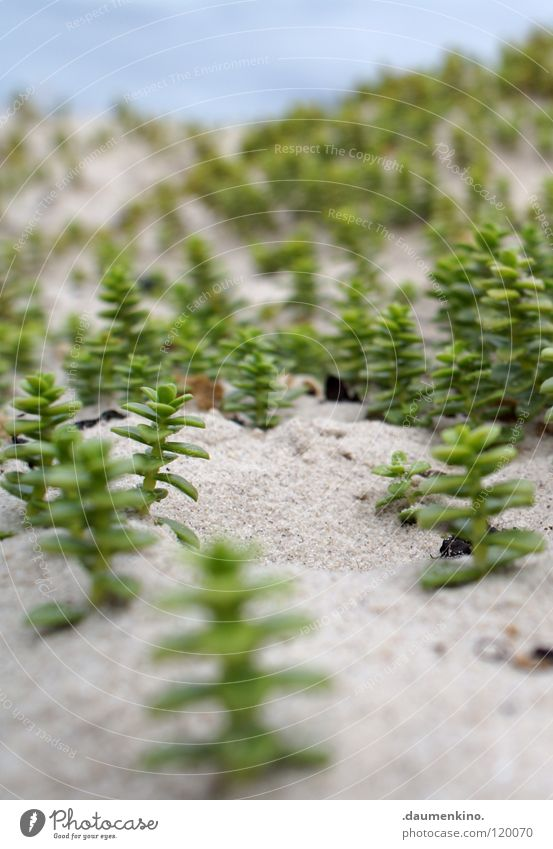 world views Beach Plant Forest Ocean Tree Depth of field Modern Macro (Extreme close-up) Close-up Sand Stone Earth Water Branch