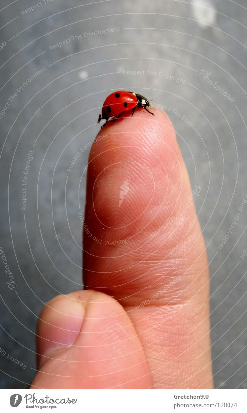 Red Happy Gray Stone Skin Fingers Insect Point Ladybird Beetle