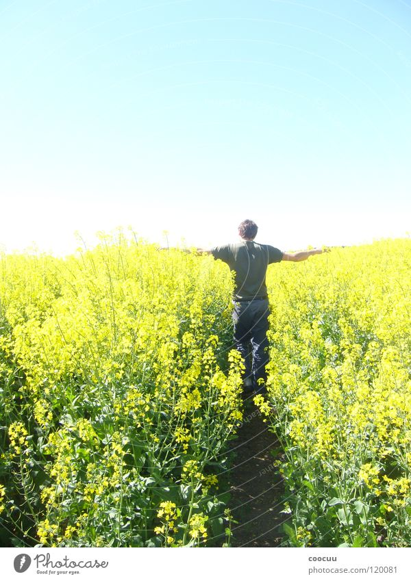 growth Canola Maturing time Man Yellow Field Division Farmer Growth Simple Sky fifty heaven and earth Sun Goodbye