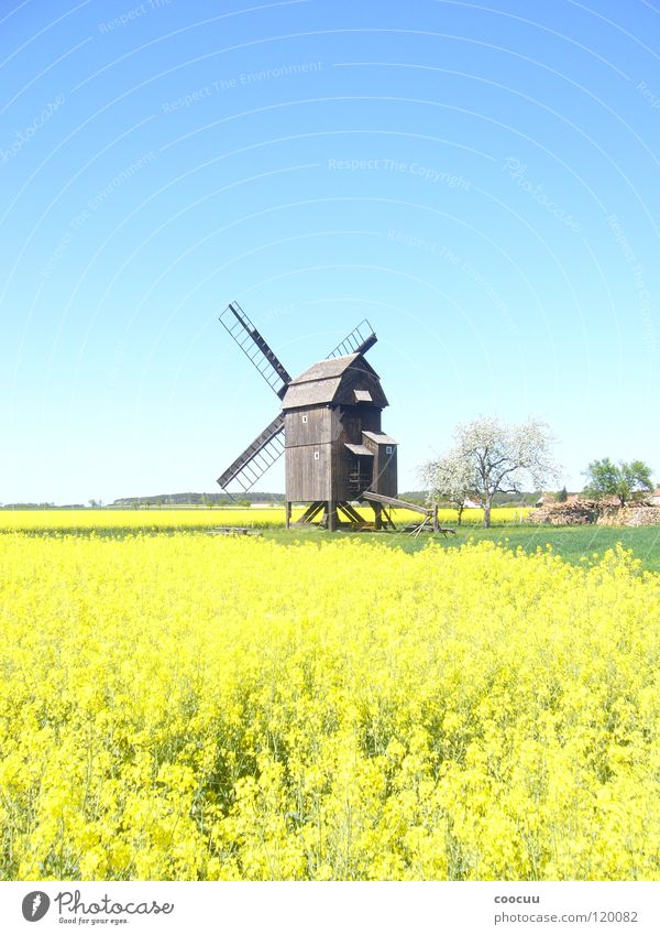 windmill Summer Canola Field Windmill Home country Nature heaven and earth
