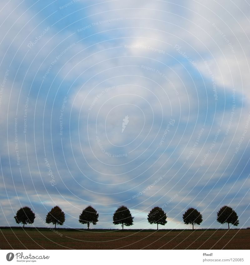 Sky Tree Clouds Landscape Line Field Arrangement Row Treetop 7 Symmetry Bad weather Beaded Row of trees