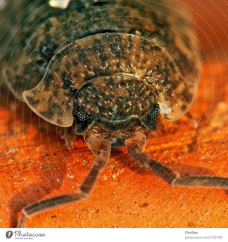 Old Red Eyes Animal Gray Sand Brown Fear Dirty Insect Disgust Panic Barn Beige Feeler