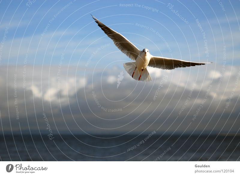 Sky Vacation & Travel Blue White Ocean Relaxation Clouds Joy Beach Warmth Coast Happy Freedom Bird Sand Dream