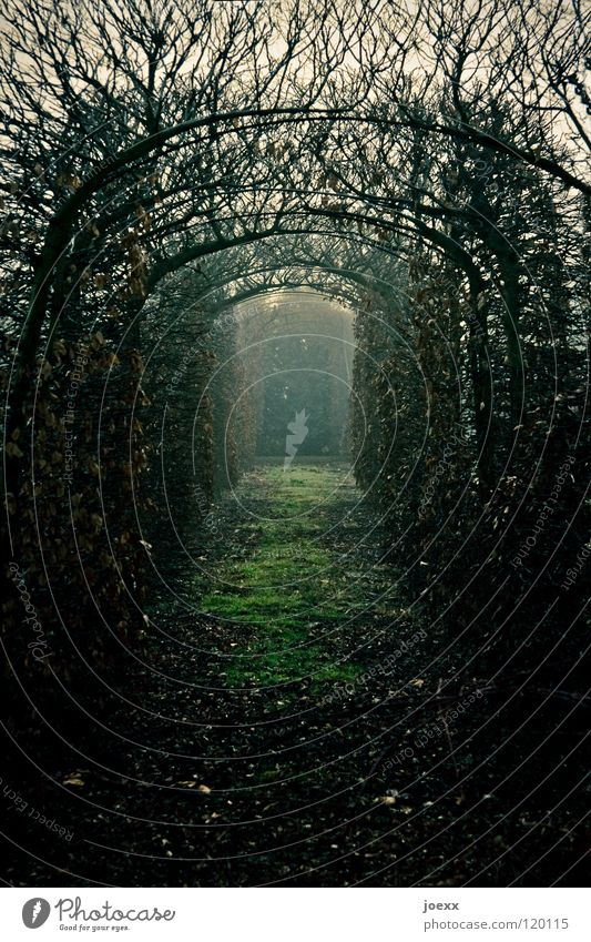 Loneliness Leaf Calm Relaxation Cold Autumn Grass Lanes & trails Hair and hairstyles Garden Sadness Park Moody Fear Fog Bushes