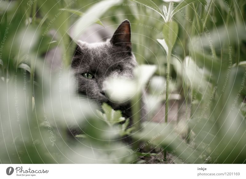 Cat Nature Plant Green Summer Relaxation Calm Animal Spring Emotions Natural Garden Lie Contentment Idyll Protection