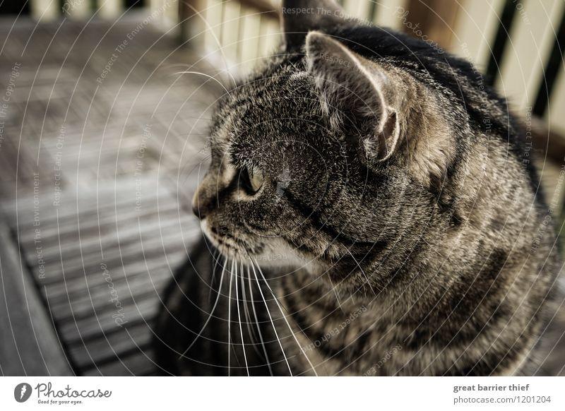 Cat Beautiful Animal Yellow Brown Wait Observe Uniqueness Curiosity Near Pelt Pet Animal face Interest Pride Cuddly