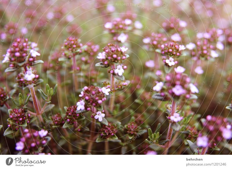 Nature Plant Summer Beautiful Flower Leaf Blossom Meadow Small Garden Park Growth Blossoming Herbs and spices Delicious Delicate