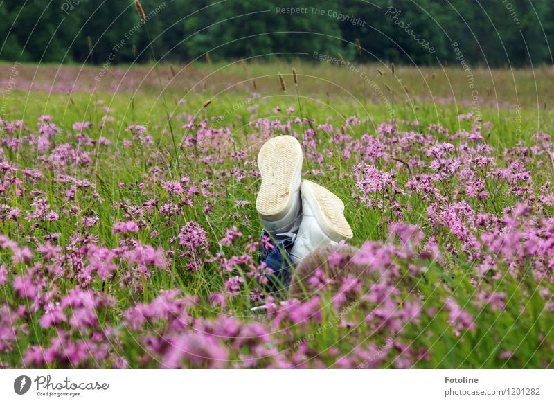 Freedom to be a child Human being Child Infancy Environment Nature Landscape Plant Summer Beautiful weather Flower Grass Blossom Meadow Bright Near Natural