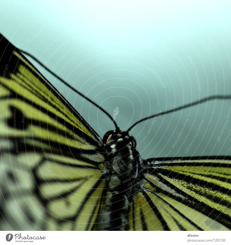 Nature Beautiful Calm Animal Flying Soft Wing Insect Delicate Butterfly Easy Smooth Exotic Ease Feeler Crawl
