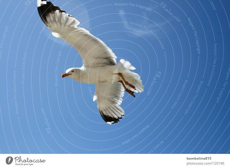 Seagull in Venice Bird Animal Air seagull Sky Flying