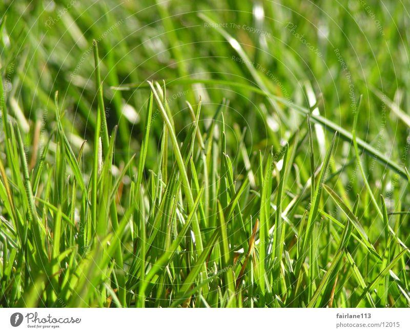 Sun Green Grass Lawn