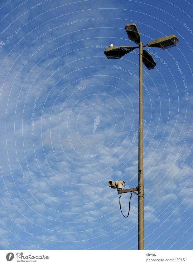 Careful, from above, Minister of the Interior! Lamp Lantern Street lighting Seagull Bird Clouds Safety Camera Surveillance Tin Services Might Above Looking Sky