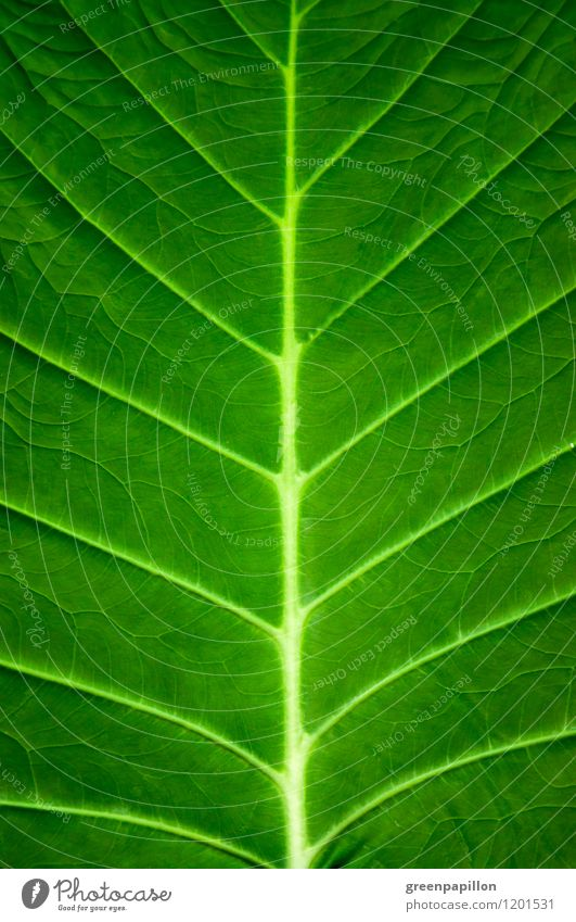 Nature Plant Green Colour Tree Leaf Forest Environment Spring Garden Line Park Energy industry Fresh Climate