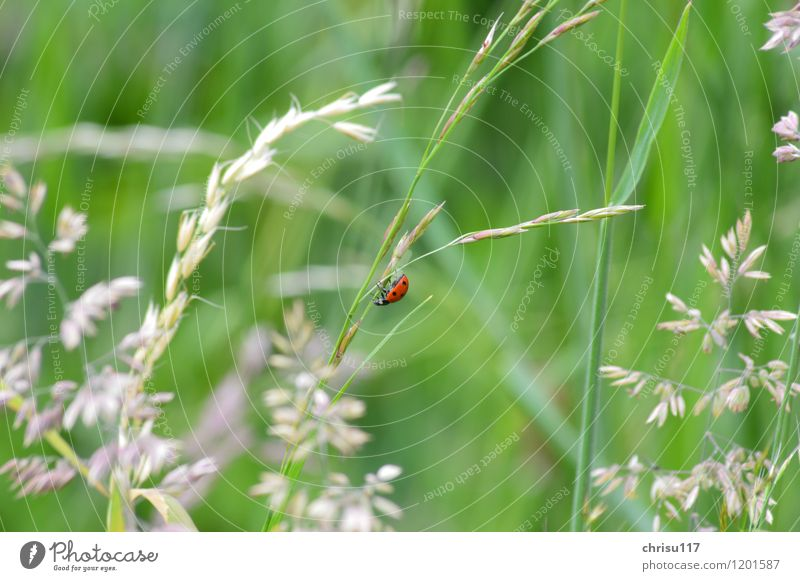 and down again ... Nature Landscape Animal Wild animal Beetle 1 Movement Hang Crawl Ladybird Colour photo Exterior shot Close-up Day Sunlight