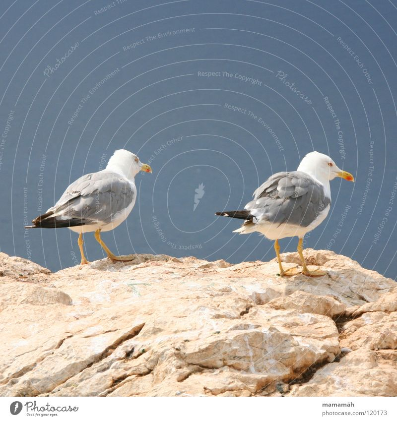 I'm taking off! Part 1 Seagull Lake Ocean Stand Beak Boredom Bird Stone Rock Feather Feet Sky Mountain keep an eye out