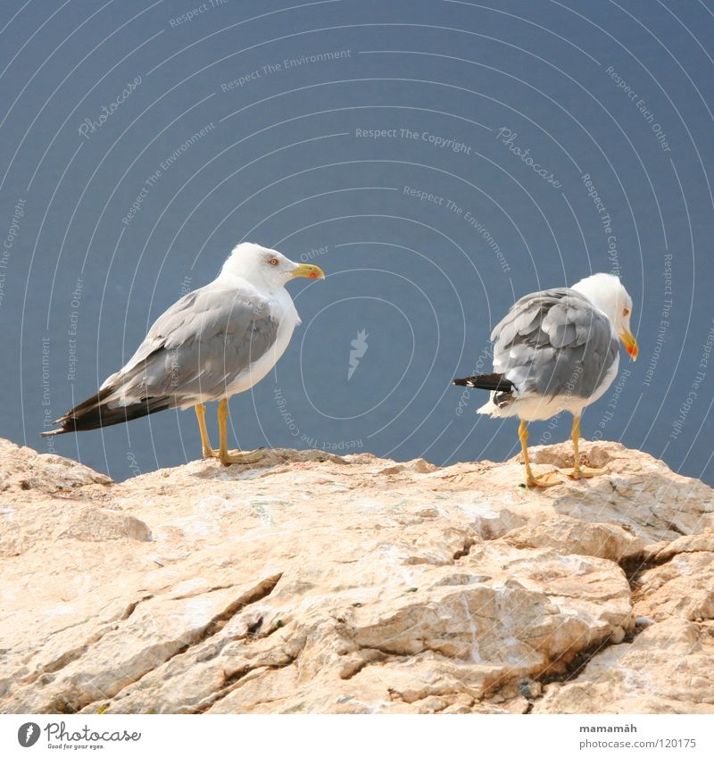 Sky Ocean Mountain Stone Lake Feet Bird Rock Stand Feather Seagull Boredom Beak